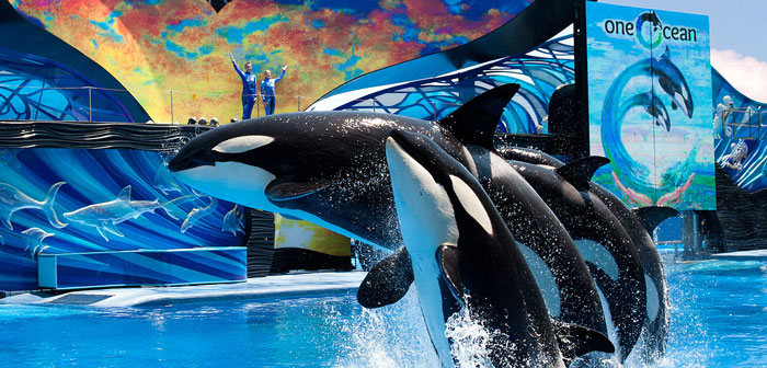 Sea World Shows